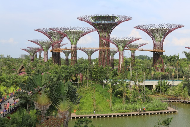 "The ""supertrees"" tower over the Gardens By The Bay. The tallest one will even have a restaurant in it (which isn't open yet)."